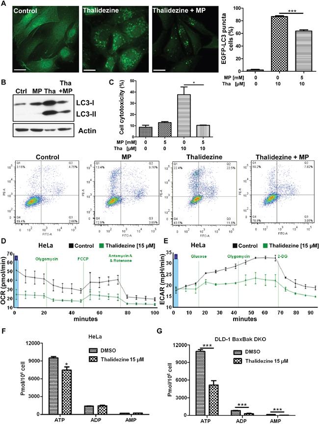 Thalidezine suppresses cancer cell energy metabolism.