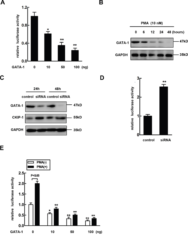 Overexpression of GATA-1 reverses PMA-mediated CKIP-1 expression induction.