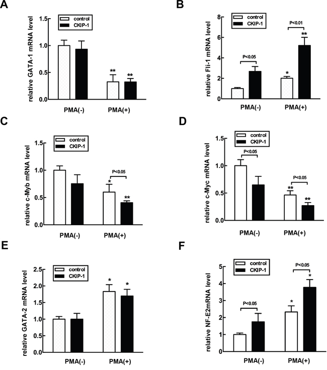 Alteration of expression levels of hematopoietic transcription factors in CKIP-1-overexpressing K562 cells.