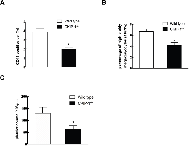 CKIP-1-/- mice possess decreased numbers of CD41-positive cells and platelets.
