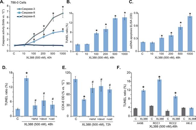 XL388 activates apoptosis in RCC cells.