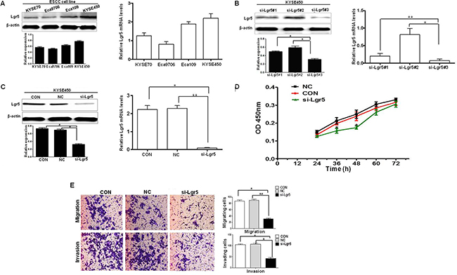 Silencing of Lgr5 inhibits the proliferation, migration and invasion.