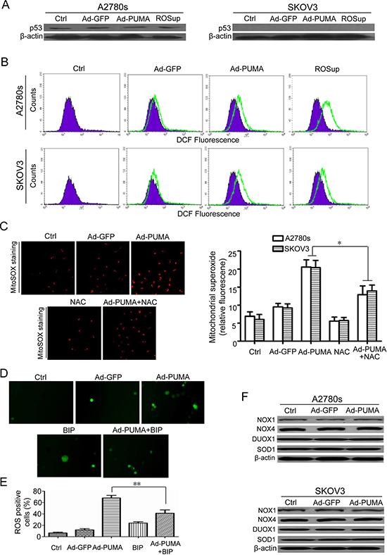 PUMA induces mitochondria ROS generation through functional BAX.