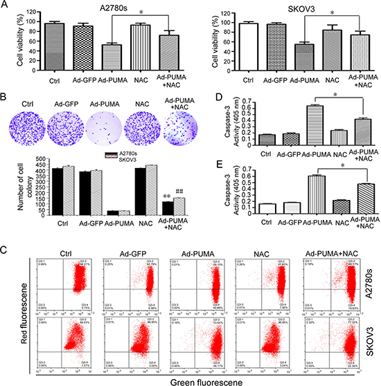Role of PUMA-induced ROS in the proliferation inhibition of ovarian cancer cells.