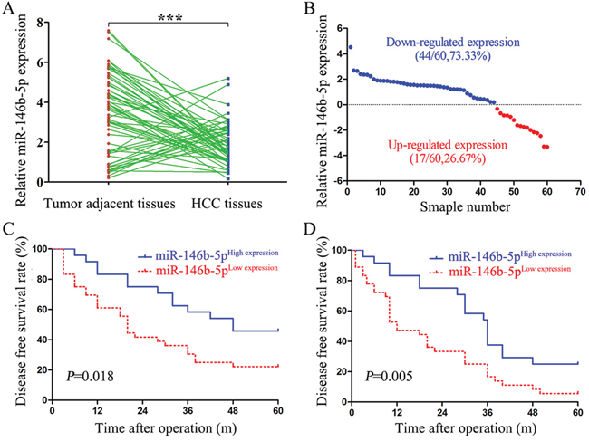 Low expression of miR-146b-5p in HCC tissues relates to poor prognosis.