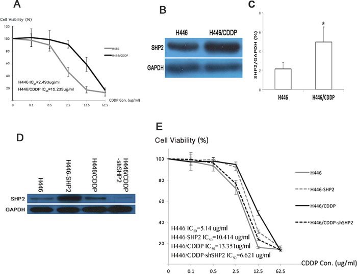 Shp2 affects SCLC's sensitivity to cisplatin.