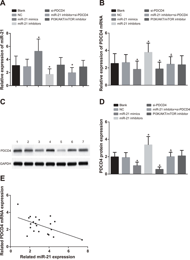 Comparisons of miR-21 expression and mRNA and protein expressions of PDCD4 among different groups in A549 cells.