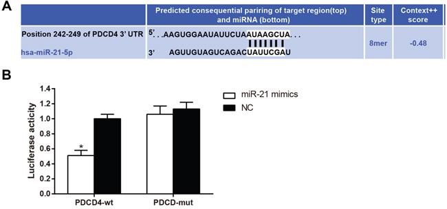 PDCD4 is the target gene of miR-21.