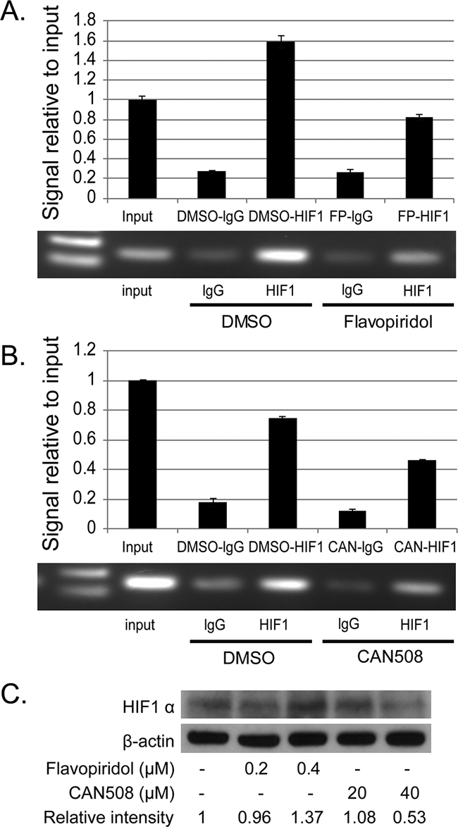 Effects of pharmaceutical inhibition of CDK9 on the binding of HIF-1α to MCL-1 promoter.