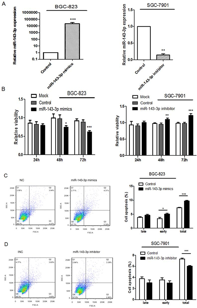Ectopic expression of miR-143-3p in gastric cancer cells suppresses cell proliferation, induces apoptosis and inhibites cell migration and invasion.