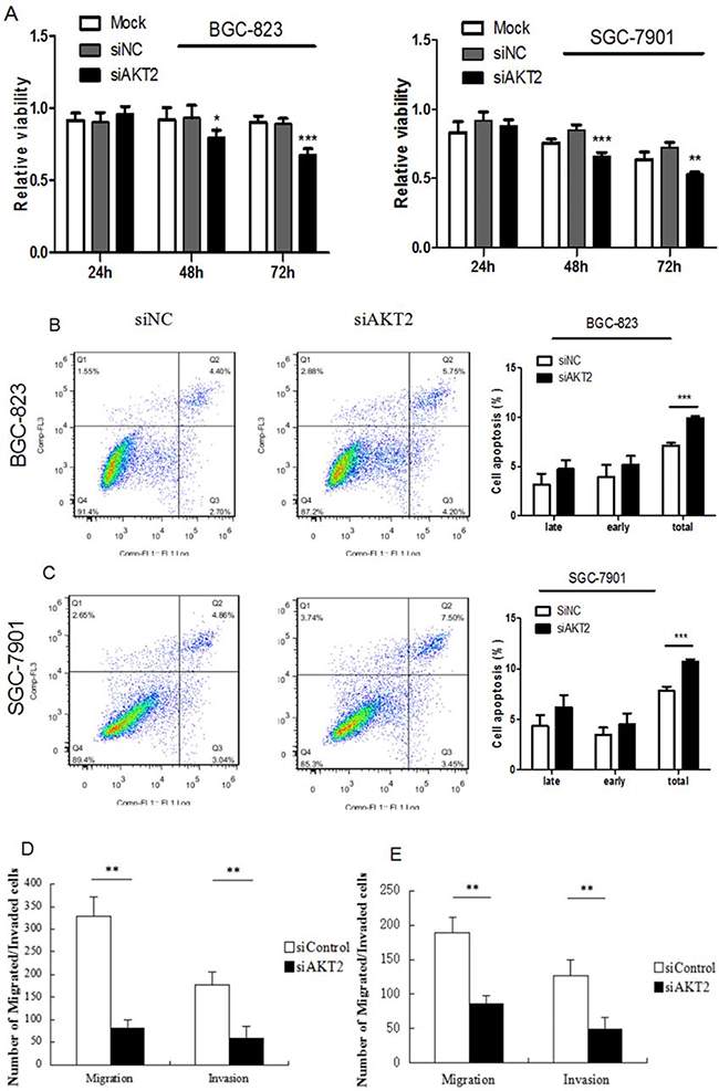 Fuctional effects of AKT2 siRNA on gastric cancer cell proliferation, apoptosis, migration and invasion.