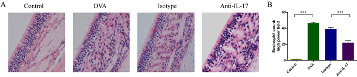 Anti-IL-17 Abs reduced eosinophil infiltration into the nasal mucosa.