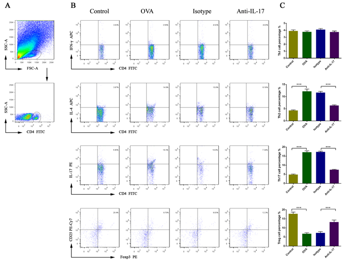 The effects of anti-IL-17 Ab treatment on the proportions of Th1, Th2, Th17, and Treg cells in nasal mucosa, calculated using flow cytometry.