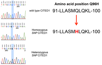 A homozygous single nucleotide polymorphism in the NES domain of