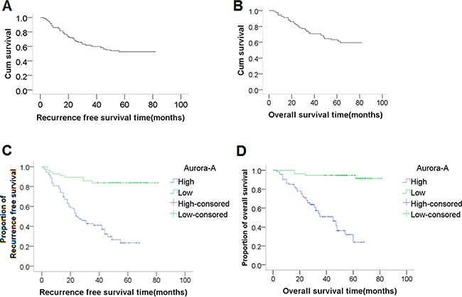 Recurrence-free survival (RFS) and overall survival (OS) curves, and the association between AURKA expression and survival.