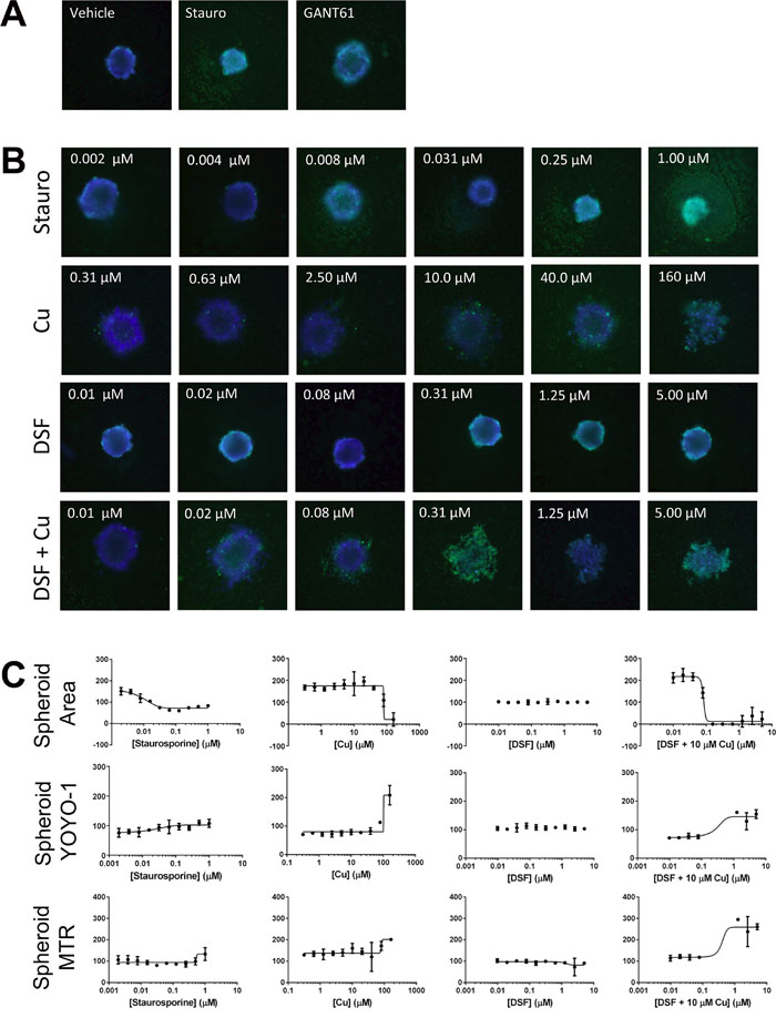 DSF in combination with copper inhibits SUM149-derived spheroids grown in a high-throughput assay format.