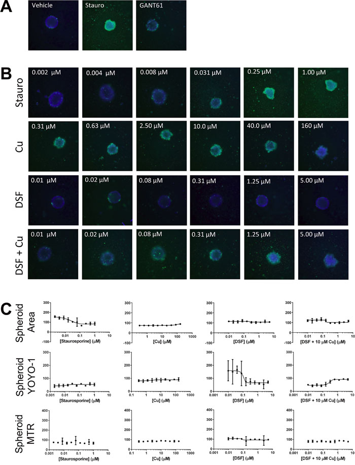 Targeting formation of SUM190-derived spheroids in the high content, high-throughput assay.