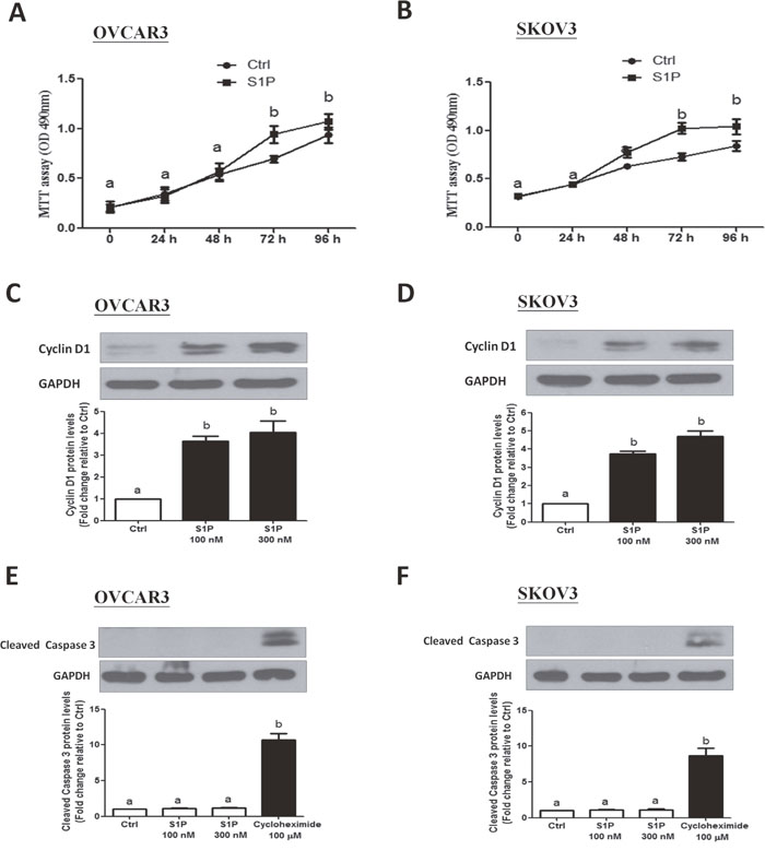 S1P stimulates cell proliferation in OVCAR3 and SKOV3 cells.