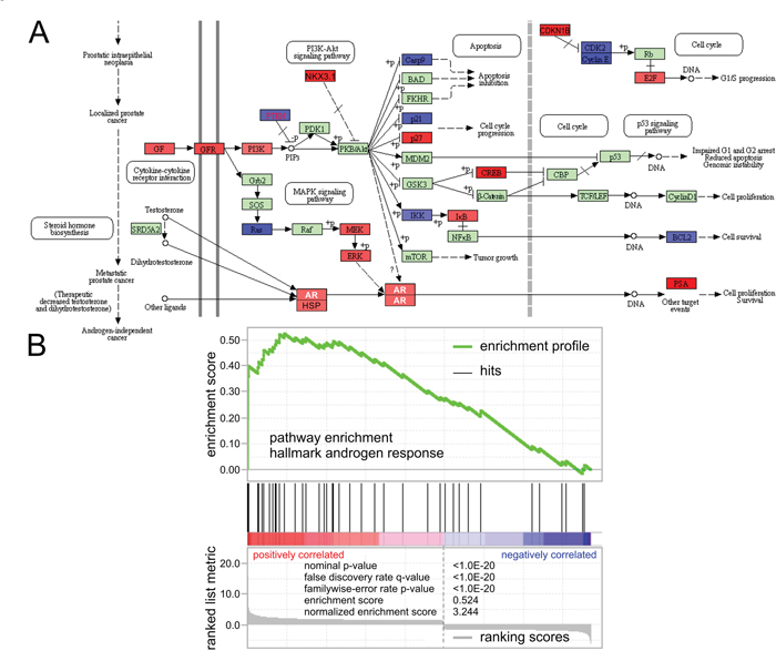 Knockdown of KDM3A results in epigenetic control and transcriptional activation of the androgen response.