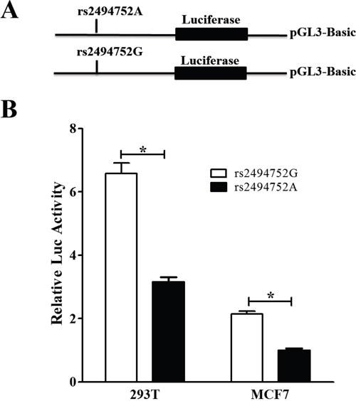 Effect of the rs2494752 polymorphism on the AKT1 promoter activity.