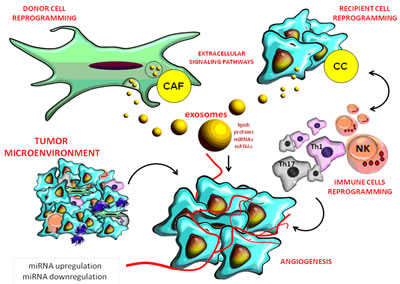 Role of miRNAs in the complex interactions between the tumor and stromal cells in its micro-environment.