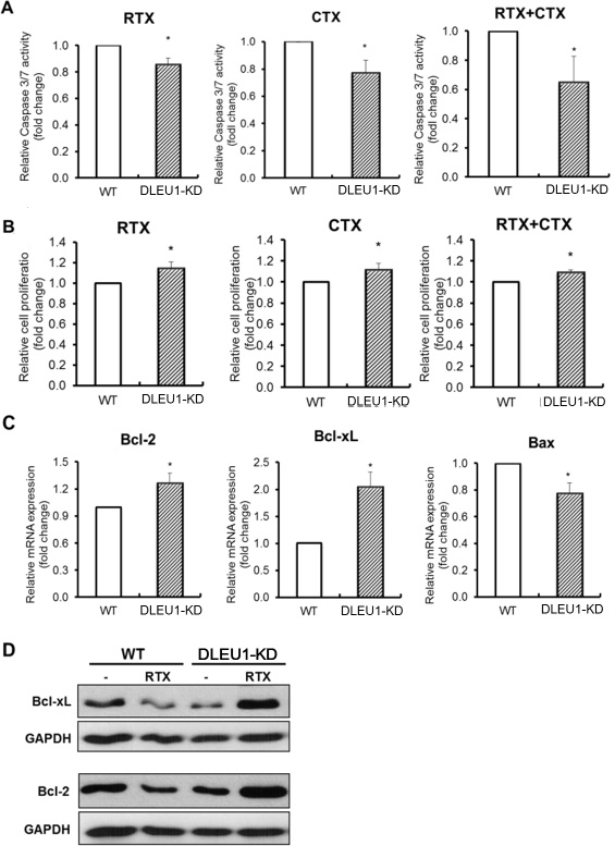 Caspase-dependent apoptosis and cell proliferation in rituximab and cyclophosphamide alone or in combination-treated DLEU1-KD vs WT cells.