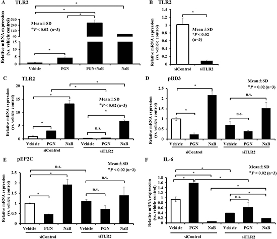 Role of TLR2 in AMP expression control by peptidoglycan and NaB in PK-15 cells.