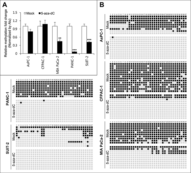 Methylation analyses of miR-1247 in pancreatic cancer cell lines.