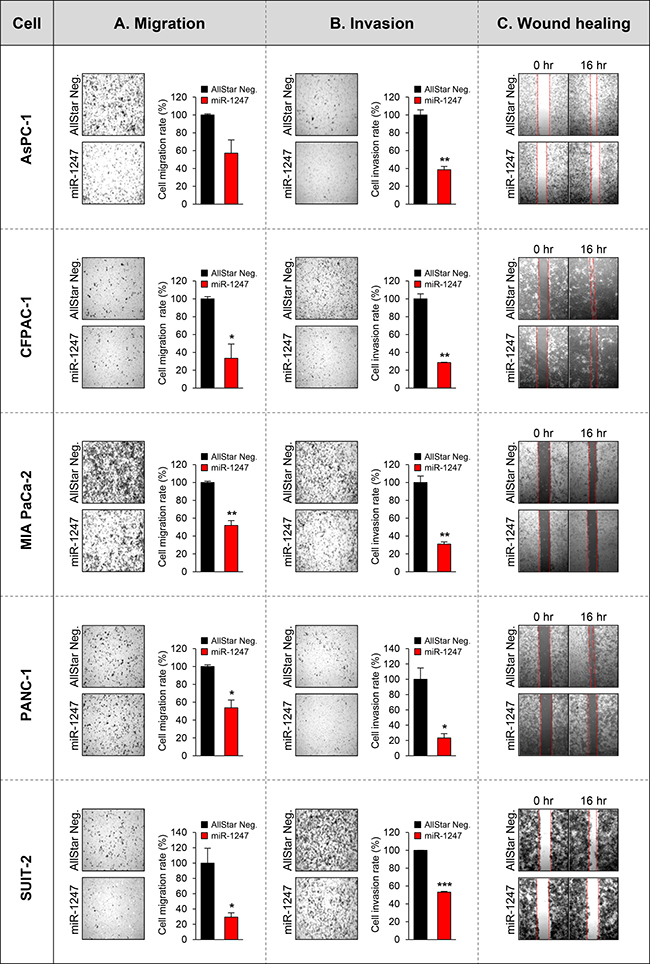 Functional analyses of miR-1247 in pancreatic cancer cells.