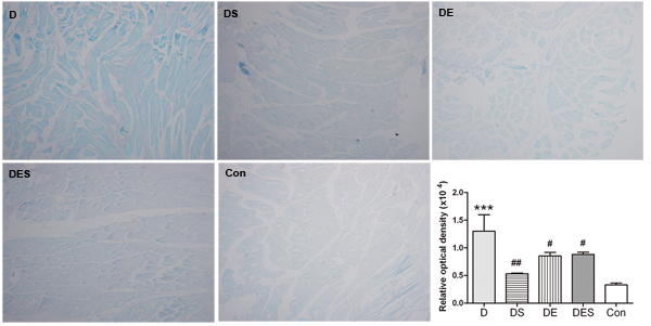 Effects of spermidine and/or exercise on the damage of gastrocnemius muscle in D-gal-induced aging rats through the evaluation of SA-β-gal staining (×40).
