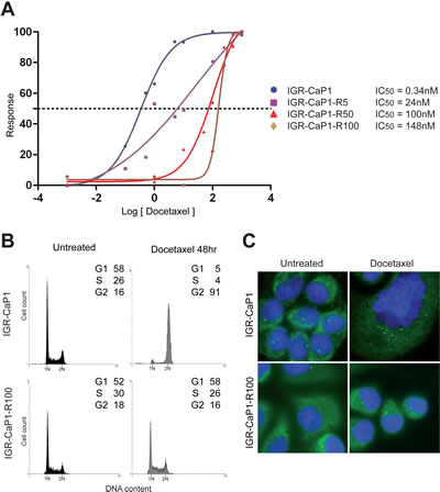 Characterization of Docetaxel-resistant cell lines.
