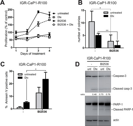 PLK1 inhibition induces cell death in Docetaxel-resistant cells.