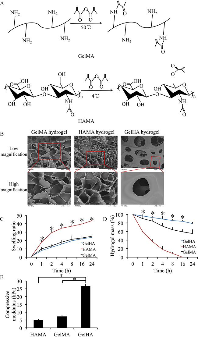 Preparation and characterization of GelHA hydrogels.