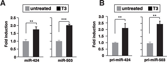 T3 induces transcription of miR424 and miR503 in hepatocarcinoma cells.