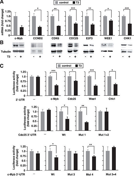 T3 down-regulates expression of miRNA424/503 targets.