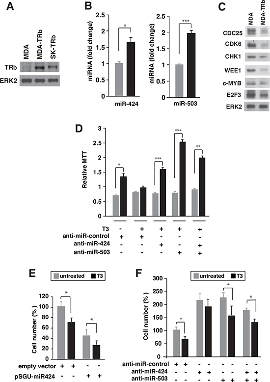 T3 induces expression of miR424 and miR503 in breast cancer cells.