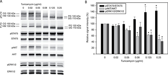 Tunicamycin inhibits glycosylation and modulates signal transduction of FLT3ITD.