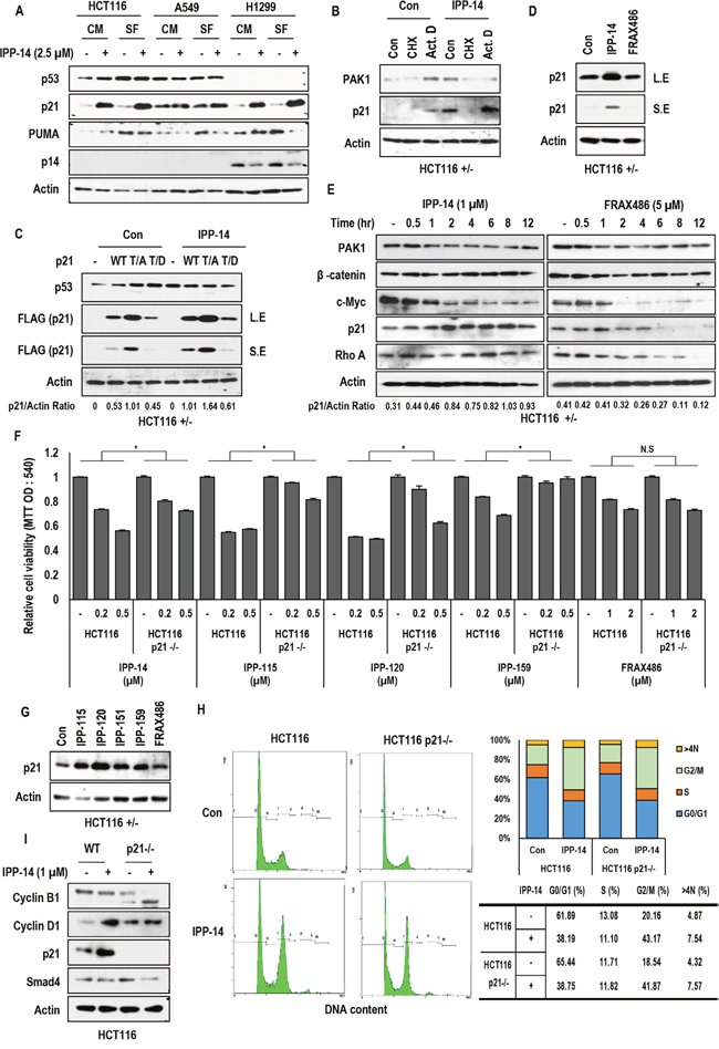 Rapid induction of p21 by IPP-14.