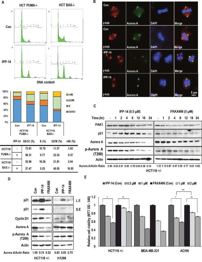 IPP-14 chemical induces G2 arrest through Aurora A inhibition.