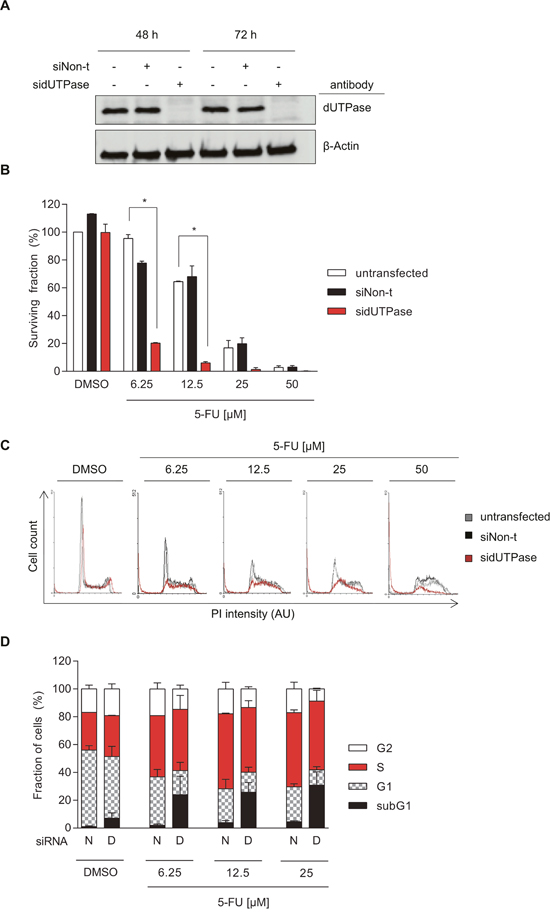 Depletion of dUTPase increases cytotoxicity of 5-FU in colorectal cancer cells.