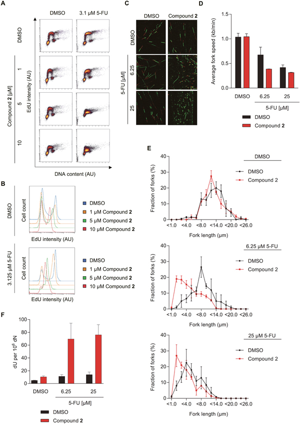 The dUTPase inhibitors increase 5-FU efficacy by increasing dU in DNA and reducing replication fork speed.