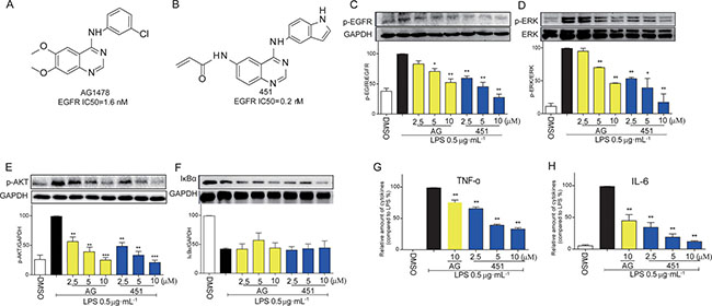 EGFR inhibitors inhibited LPS-induced EGFR signaling pathway and inflammatory production in macrophages.