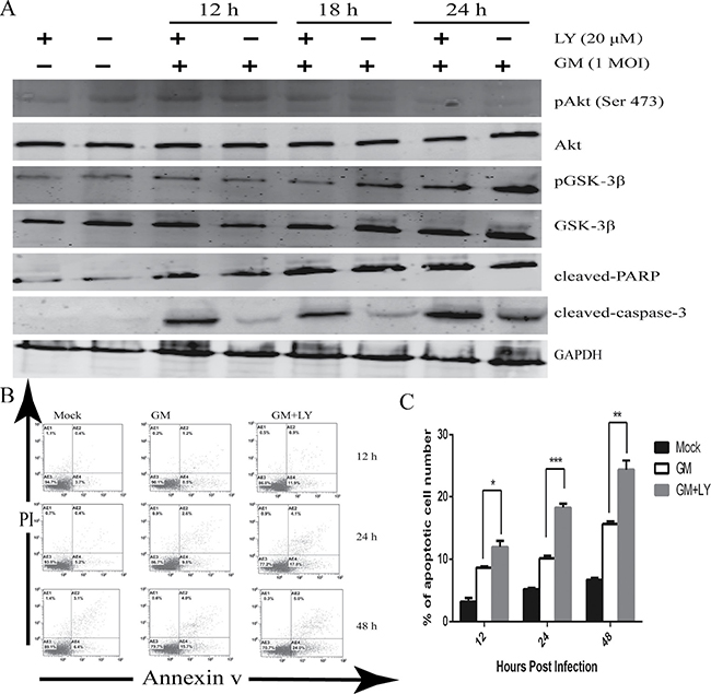 Inhibition of PI3K activity results in the apoptosis of CEF cells.