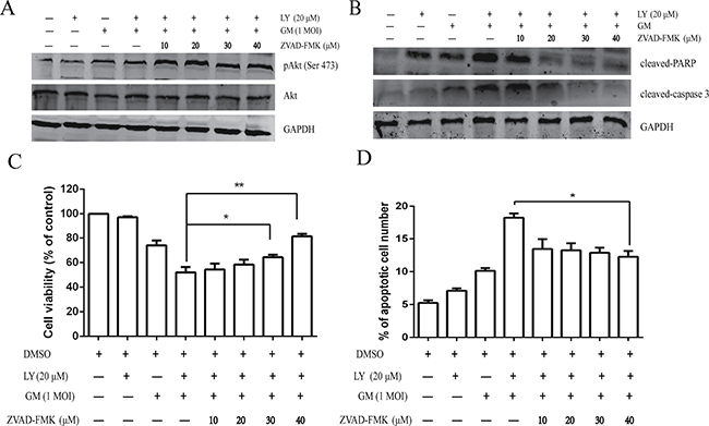 Pharmacological inhibition of apoptosis enhances NDV-triggered cell survival.