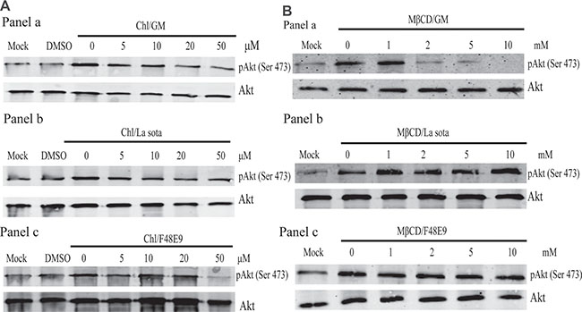 Early events of endocytosis on NDV infection involved in PI3K/Akt pathway activation.