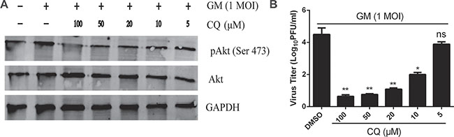 Inhibition of lysosomal acidification reduces Akt phosphorylation and NDV titers.