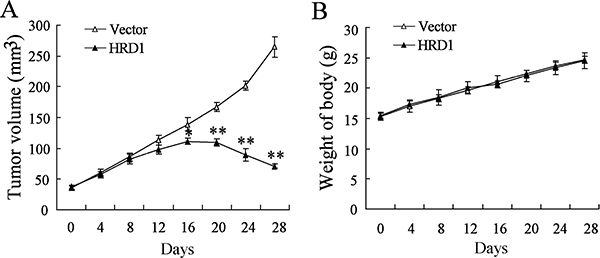 Overexpression of HRD1 increased the sensitivity of drug-resistant breast tumors to Tamoxifen treatment in vivo.