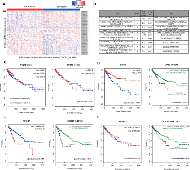 Validation of CDC42-transcriptional signature in CRC patients from The Cancer Genome Atlas (TCGA) Rectum Adenocarcinoma (READ) and Colon Adenocarcinoma datasets (COAD).