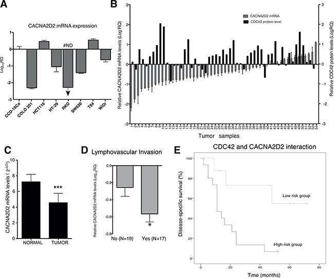 CACNA2D2 expression in CRC and prognostic value in a CRC validation cohort.