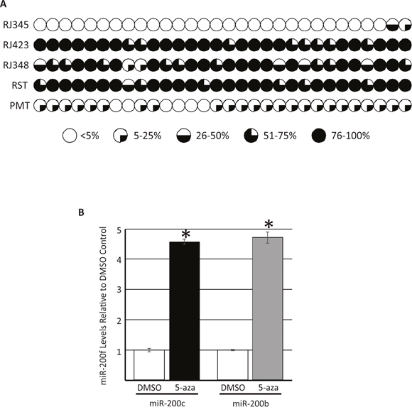 Evaluation of the methylation status of 30 CpG sites ~1000bp upstream of the miR-200c/miR-141 cluster on murine chromosome 6 as determined by targeted bisulfite sequencing.